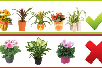 Ako vyberať kvety do detskej izby